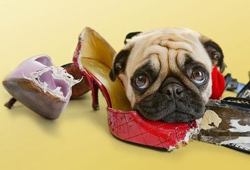 Creature Comforts Veterinary Resort and Suites, Inc.
