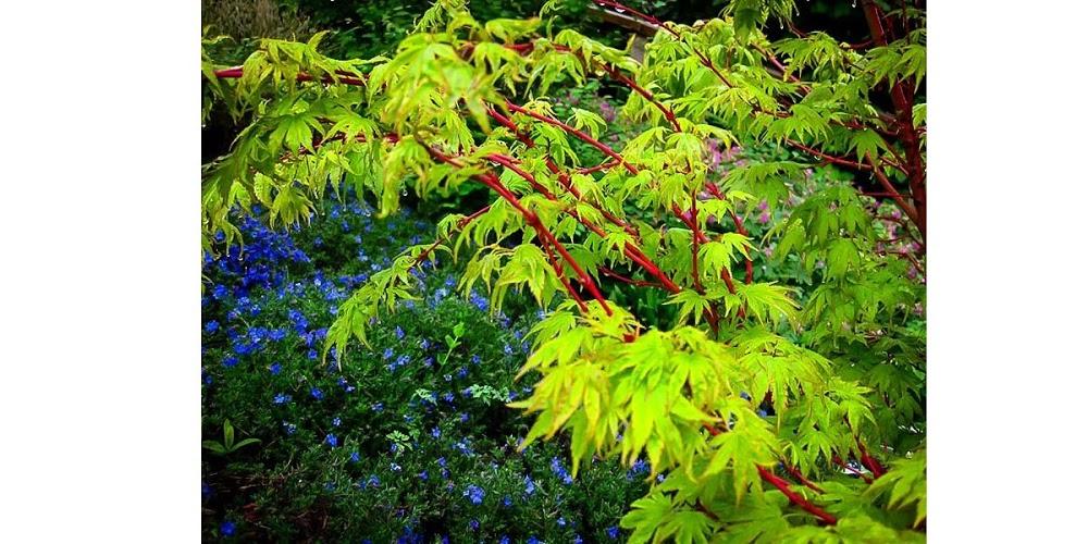 Creekside Garden Nursery of Spartanburg SC