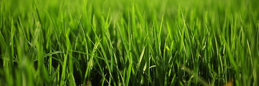 Cuttingit Close Lawn & Landscaping