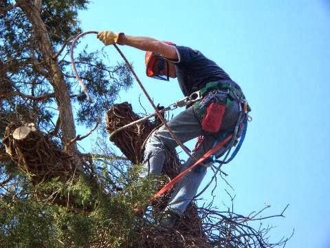 Dan's Tree Care