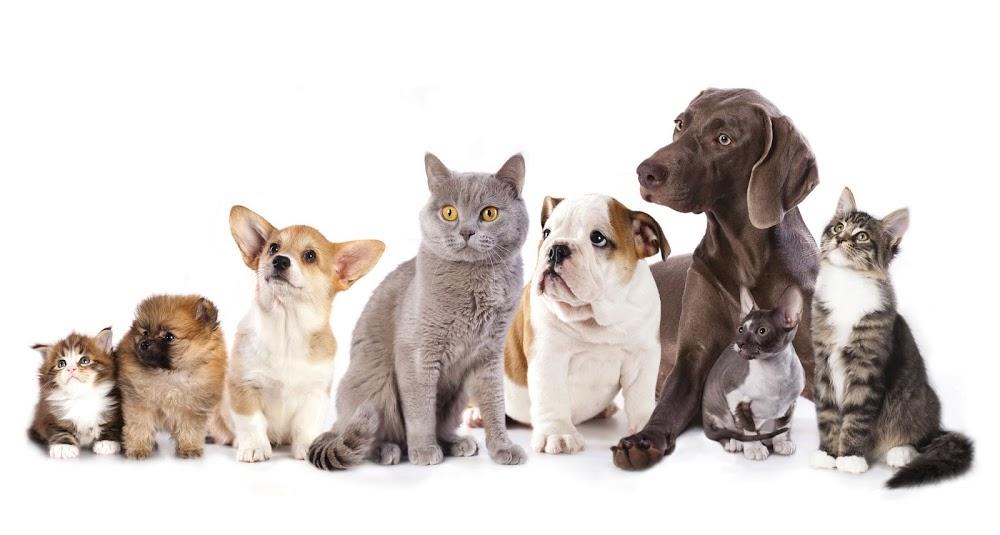 Oasis Animal Hospital & Grooming